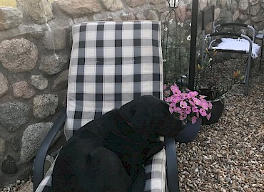 Archie relaxing on a sun lounger